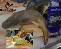 STOP THE TRADE OF SHARKS IN THAILAND