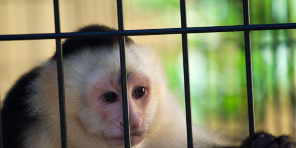 Shut Down South Korea's Monkey School!