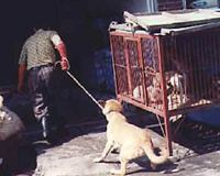 BOYCOTT CHINA...END ITS ANIMAL TERROR!