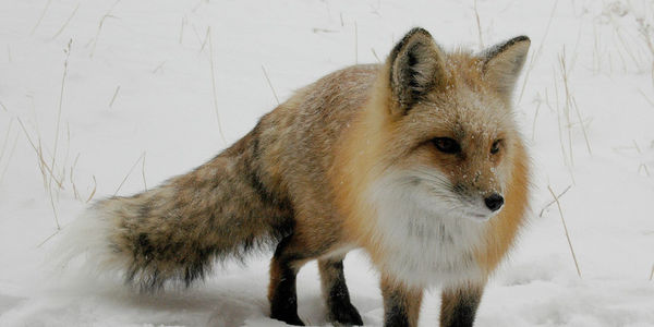 Tell Montreal Fur Farm to Stop Abusing and Torturing Animals!
