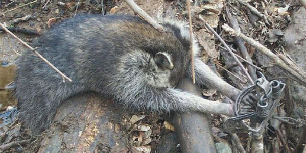 Ask Amazon to stop selling traps used to capture and torture animals!