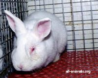 BCBG: Stop Selling Fur Clothing!