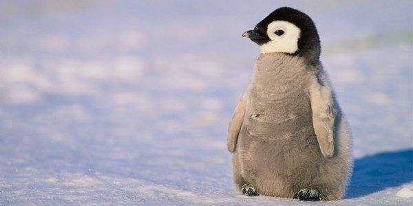 Save Penguins and Our Climate