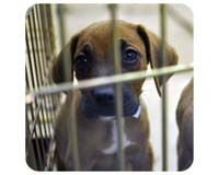 Bring All Commercial Dog Breeders Under Federal Oversight!