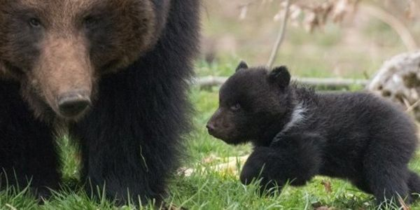 Tell Swiss Zoo, Tierpark Dählhölzli, Stop Killing Healthy Baby Animals