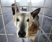 Stop Arnold From Changing Shelter Hold Time to 3 Days
