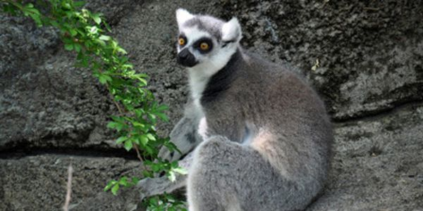 Protect Endangered Animals From Madagascar