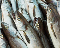 Tell the EU Not to Increase Fish Quotas