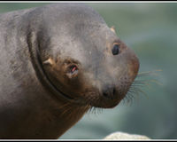 Help to save Sea Lions
