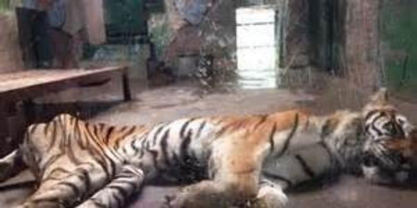 Please improve the living conditions of the animals in this Chinese Zoo