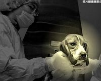 Stop Taiwan Council of Agriculture to Inject Rabies Virus to Dogs