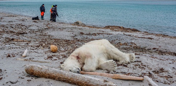 Murdered polar bear, Care2