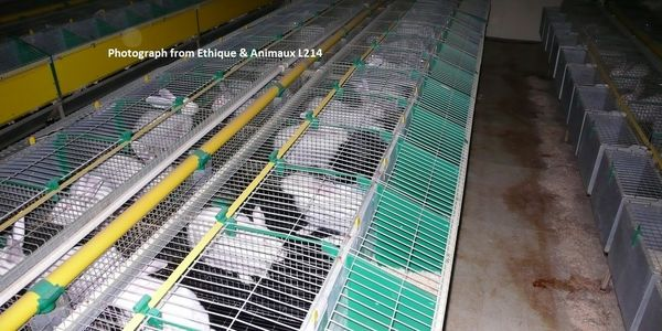Stop Intensive Rabbit Farming in France