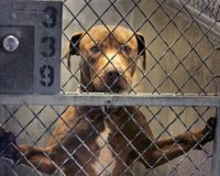 "Stop the ""flagging"" of Pet Rescue Groups on Craigslist"