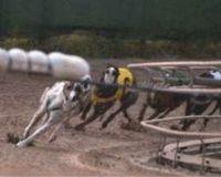 Bannissez les courses de Greyhounds 992293-1217671413-main
