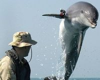 Eliminate The U.S. Navy Marine Mammal Program