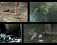 We are again calling to close the new concentrate shelter for dogs in city Cicerale ( Salerno/Italy