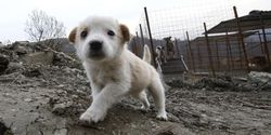 Send Thanks to Washington's Dog Shelter for Offering Sochi Strays for Adoption