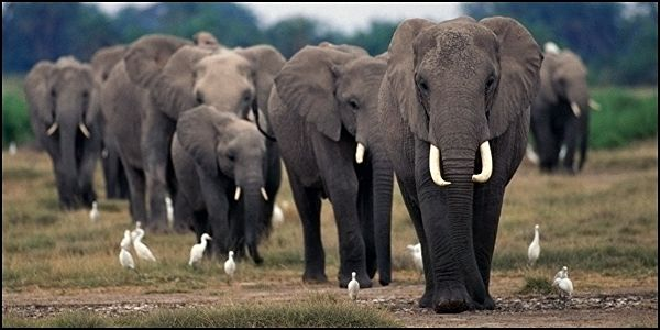 Stop Oil Drilling Plans in Forest Elephant Corridor