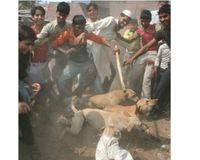 DOGS BEATEN TO DEATH.....