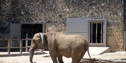 Help Lucky The Elephant At San Antonio Zoo