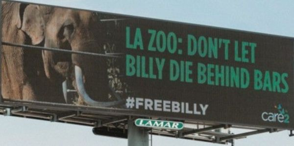 Billboard for the freedom of Billy the elephant