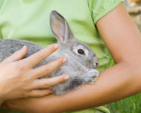 Ban Cosmetic Animal Testing in the U.S.!
