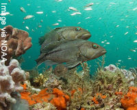 Protect Fish Populations and Keep Oceans Healthy!