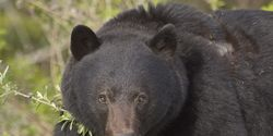 Save Bears Found in Drug Bust!