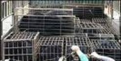 Help Stop Animal Cruelty To Moon Bears In China