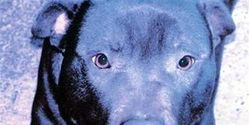 Lennox - Dog murdered by Belfast City Council