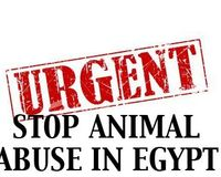 Justice For The Dog That Was Thrown Off A Roof In Egypt. WE NEED LAWS TO PROTECT ANIMALS AND PUNISH