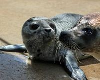 Protect Seal Birthing Grounds