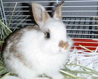 Demand that Rabbits be Included in Kingston's By-Law Banning the Sale of Non-Rescue/Shelter Animals