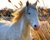 Stop the Cruel Slaughter of Horses!