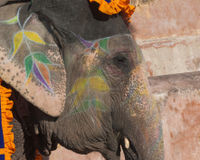 Tell the Indian Government to Enforce Animal Protection Laws!