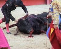 LET US BAN BULLFIGHTING!