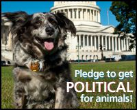 Get Political For Animals