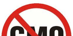 Keep Monsanto ties out of policy making on GMO's