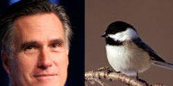 Romney: Put Wildlife Before Oil Profits!