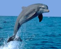 Tell Tanzania- Stop Using Dolphins as Shark Bait