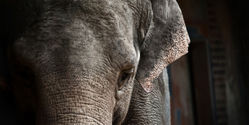 Save Elephants from Train Accidents in India