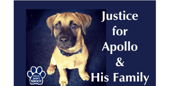 JUSTICE FOR APOLLO - FIRE OFFICER ROBERT NORRIS