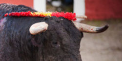 Bullfighting Isn't Culture, It's Cruelty