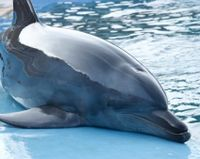 India - Don't Include Dolphins in New Oceanarium