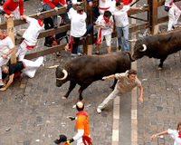 Demand the Great Bull Run Comply with the Animal Welfare Act