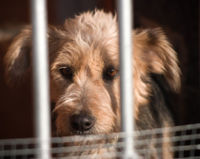 Ask the American Kennel Club to Take a Stand Against Puppy Mills