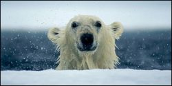 7 Ways to Help Polar Bears