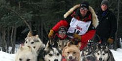 Tell Coca-Cola - Stop Sponsoring the Iditarod Dog Sled Race