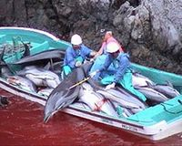 Stop Dolphin Slaughter in Taiji Japan